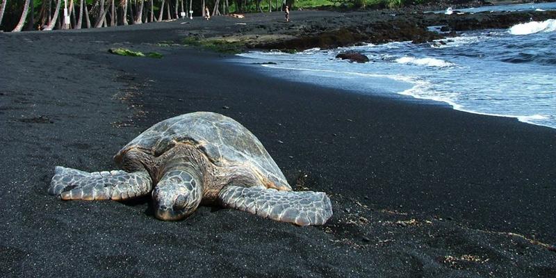 Светящиеся лагуны и черный песок: 10 необычных пляжей со всего мира