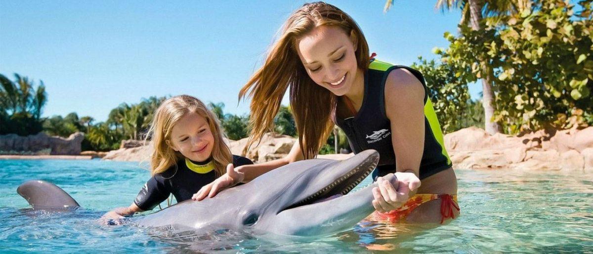 Роботы-дельфины могут заменить настоящих животных